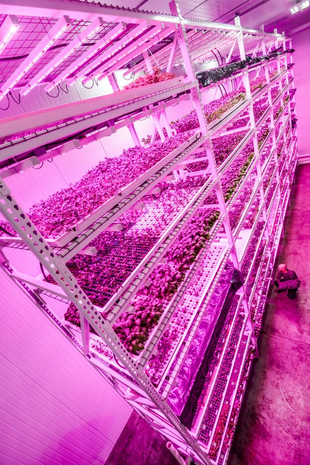 Chicago's Huge Vertical Farm Glows Under Countless LED Suns