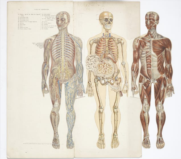 29 Anatomical Models From the Early Days of Modern Medicine