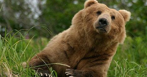 In France, Brown Bears Desperately Need Women
