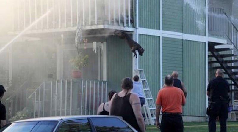 Two Dogs Escape Burning Building By Jumping Off Balcony