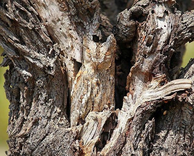 ¿Puedes ver al animal oculto a simple vista en estas fotos?