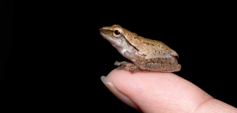 """""""Tiny Animals on Fingers"""" is our new favorite flickr group"""