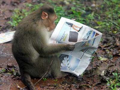 Many Primates Still Not Sure Who Won Sunday's NASCAR Race