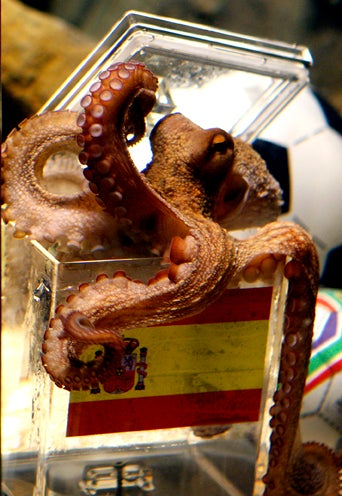 Paul the Psychic Octopus Is Dead