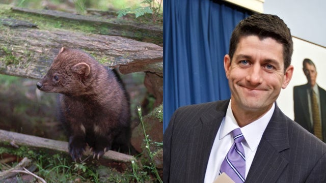 What People on Twitter Think Paul Ryan Looks Like
