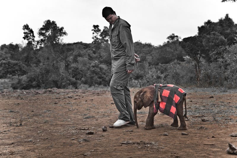 Here's Yao Ming Standing Next To A Full-Grown Elephant