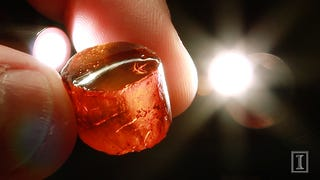Massive Collection of Ancient Amber Finally Gives Up Its Secrets