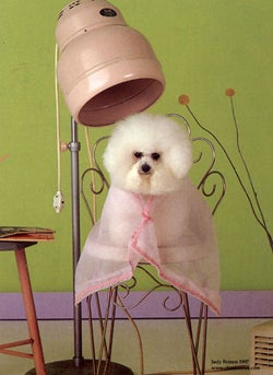 A Dog's Life Is Ruff: Win A Chance To Pamper Your Pooch!