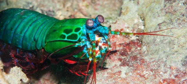 The Cancer-Spotting Smartphone Camera Inspired By Shrimps