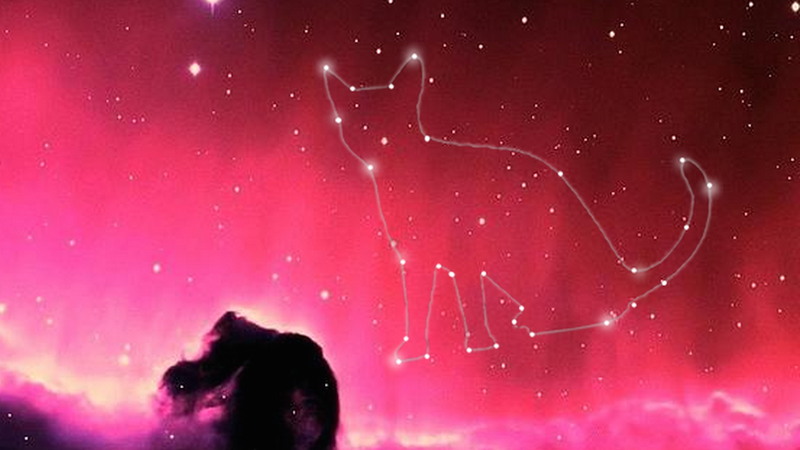 Want To Honor Your Late Pet? Send Its Remains into Deep Space!