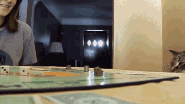Watch A Bunch Of Cats Ruin Board Games
