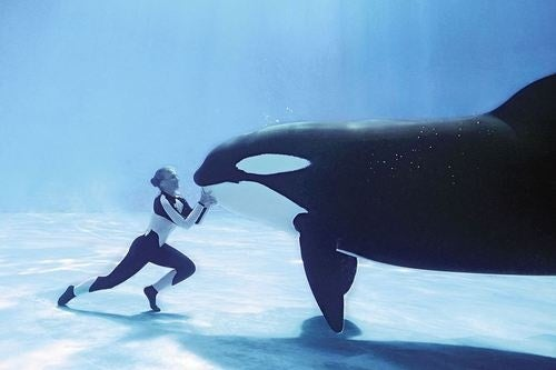 Killer Whale's Violent Past Includes Deadly Attack on Ultima-Obsessed Drifter