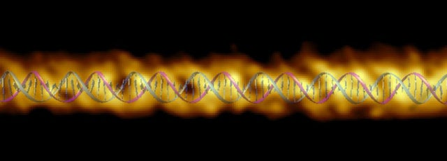 New Double Helix Visualization Revises What We Know About DNA