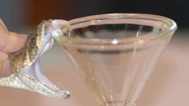 Can you actually get high on snake venom?
