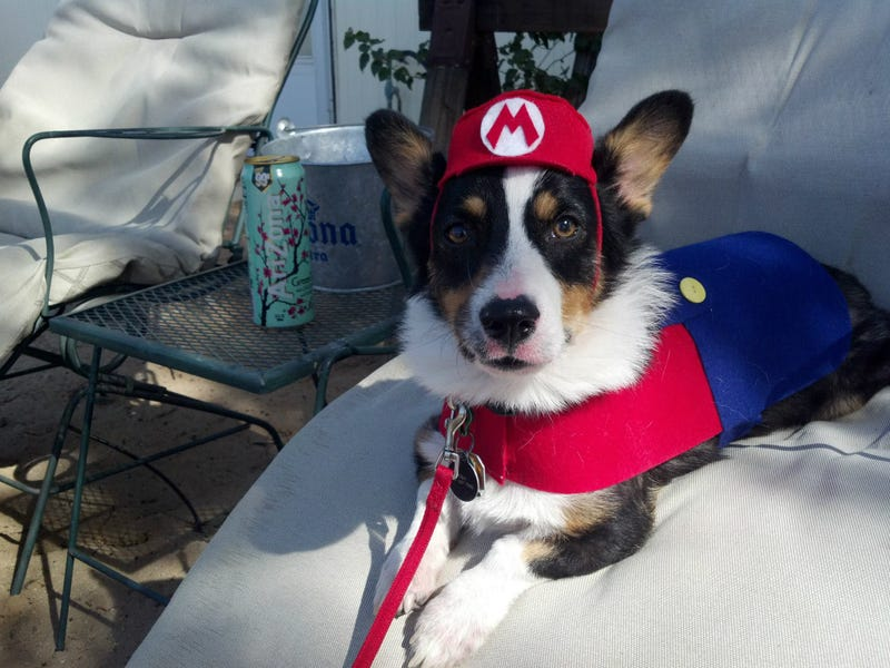 Had A Rough Day? Here's A Cosplaying Corgi