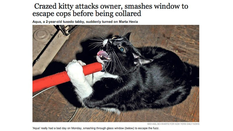 Crazed Cat Takes Harrowing Arrest Photo After 'Trying to Kill' Owner