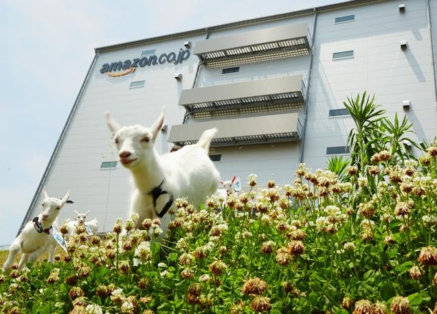 ​Amazon Japan Has Doubled Its Goats