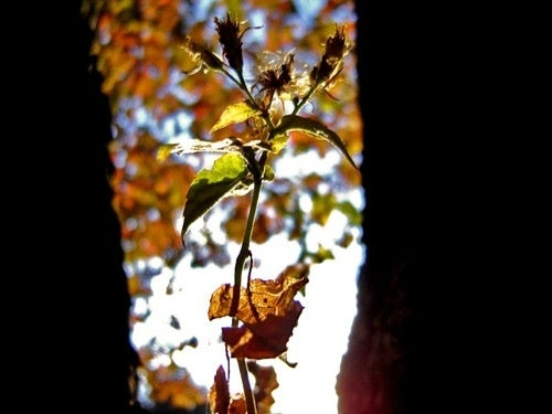 Shooting Challenge: Fall Leaves Gallery