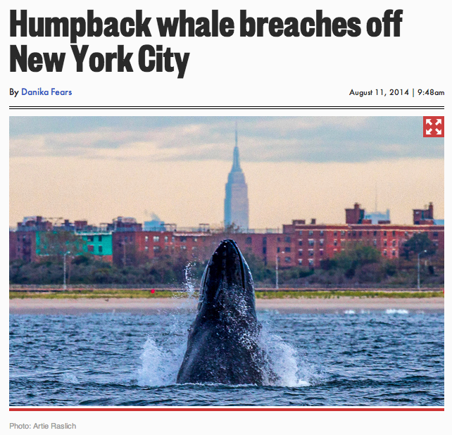What a Talented Whale