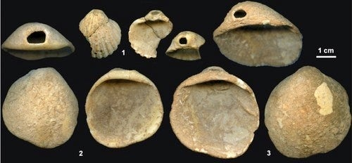 New Evidence That Neandertals Wore Shell Jewelry And Painted