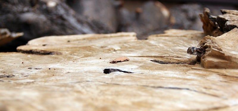 Wood Shooting Challenge
