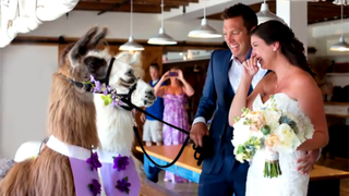 Hey, Assholes: You Do Not Need an Exotic Animal at Your Wedding