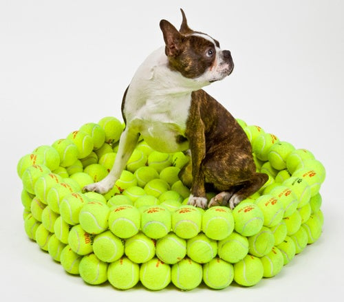 Dog Bed Made From Tennis Balls Provokes Chewy Dreams