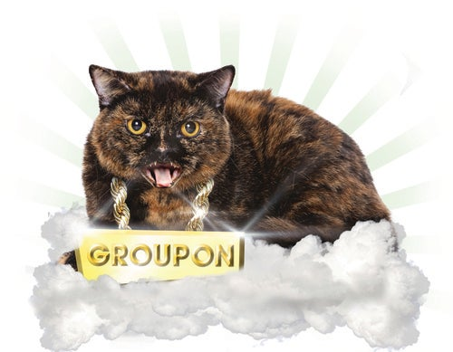 Spot 5 Groupon Cats, Win Tickets to The 2010 Webutante Ball