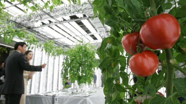 14 High Tech Farms Where Veggies Grow Indoors