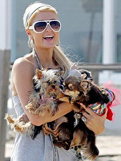 "Paris Hilton Loves Doggie Style; David Carradine Loved ""Elaborate Sexual Devices"""