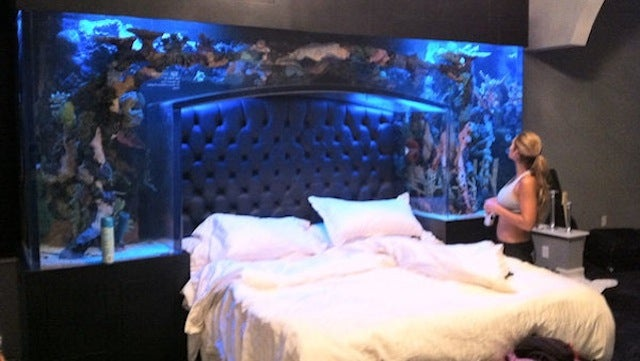 This Evening: The Giant Fish Tank That Doubles As A Headboard On Chad Ochocinco's Bed