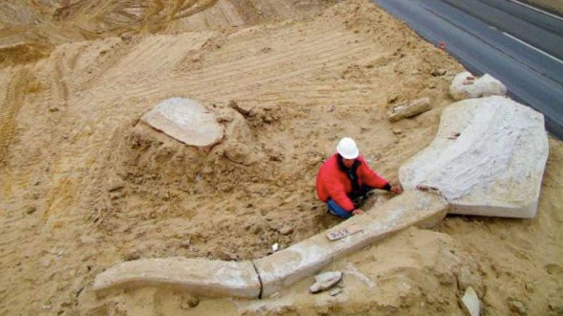 What are the fossilized remains of more than 80 whales doing in the driest desert on Earth?