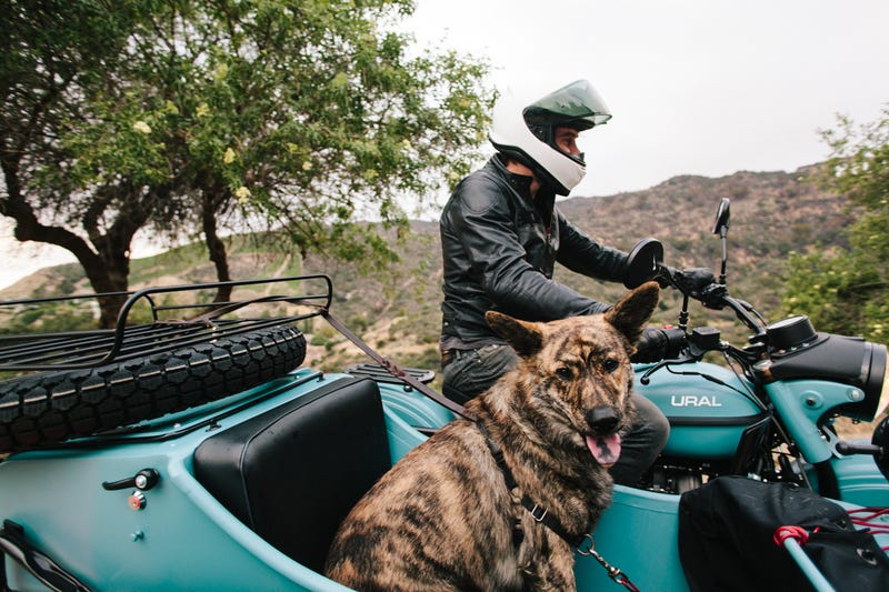 ​Dogs And Sidecars, A Match Made In Motorcycle Heaven