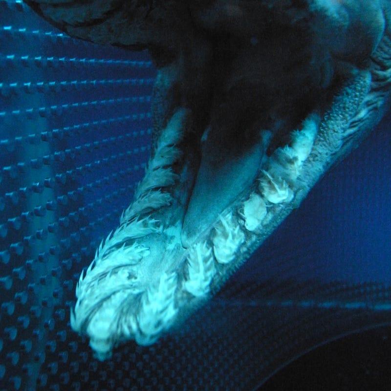 ODeck Shark Week: Deep Water Aliens