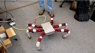 This Hexapod's Appendages Are Made Fro