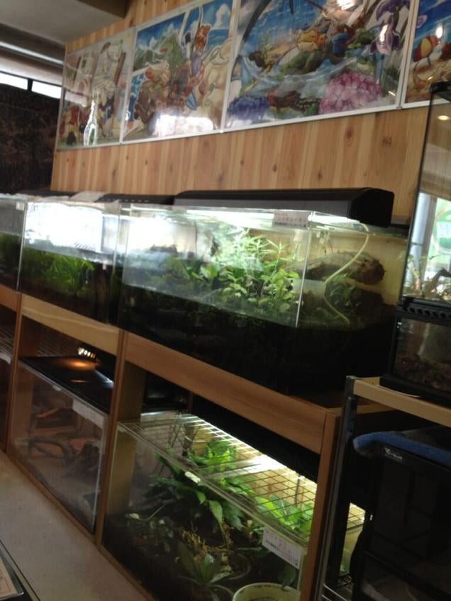 A Look Inside Japan's Reptile Cafes