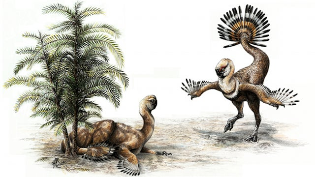 "Dinosaurs probably shook their tail feathers and ""struck a pose"" to attract mates"