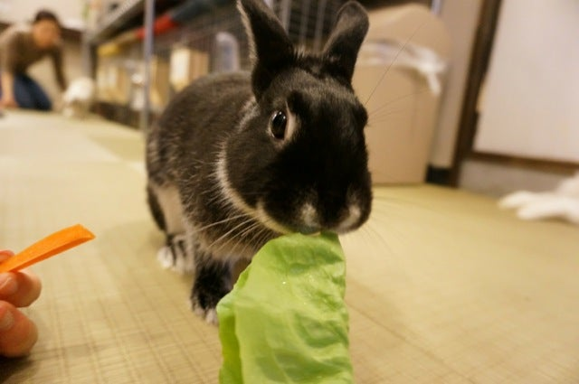 A Visit to Japan's Bunny Cafes