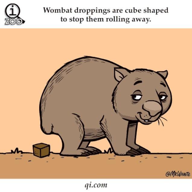 Ennél az animált GIF-állatkertnél aranyosabb ma már nem lesz