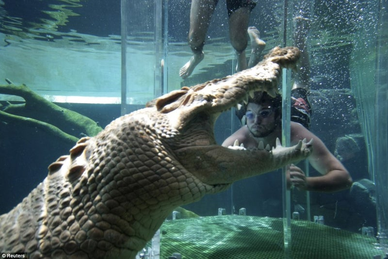 Australian Cage of Death Taunts Crocodiles With Human Food
