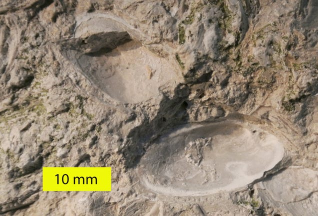 Five Bizarre Fossil Discoveries That Got Scientists Excited