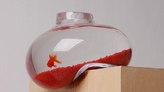 The Bubble Fish Tank Would Make Salvador Dali Proud