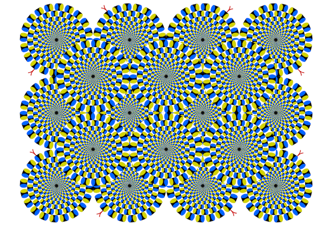 Can animals see optical illusions? Kitty says YES.