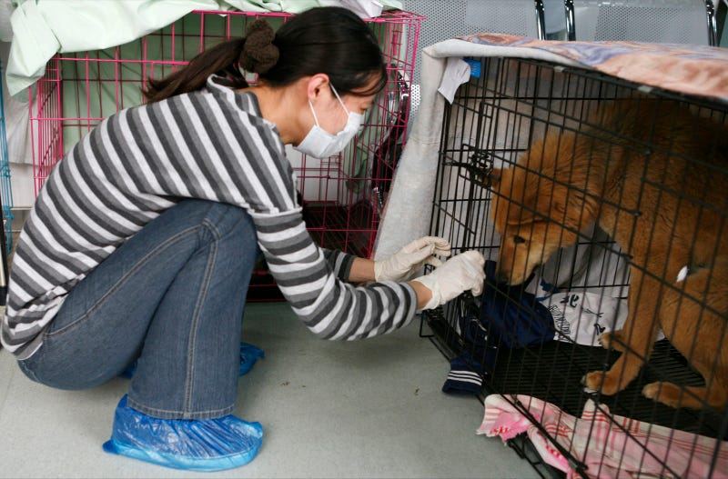 Chinese motorist saves 580 dogs from slaughter