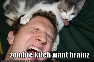 zombie kitten