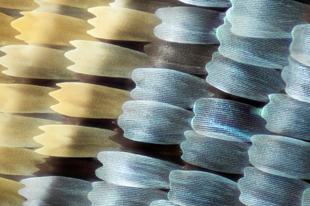 Check out these stunning macro-focus shots of butterfly and moth wings