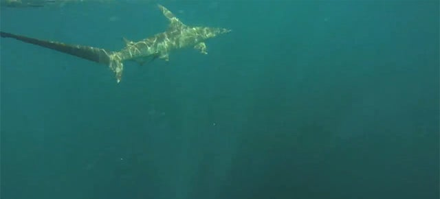Man in kayak hooks 11-foot hammerhead shark, gets towed for 12 miles
