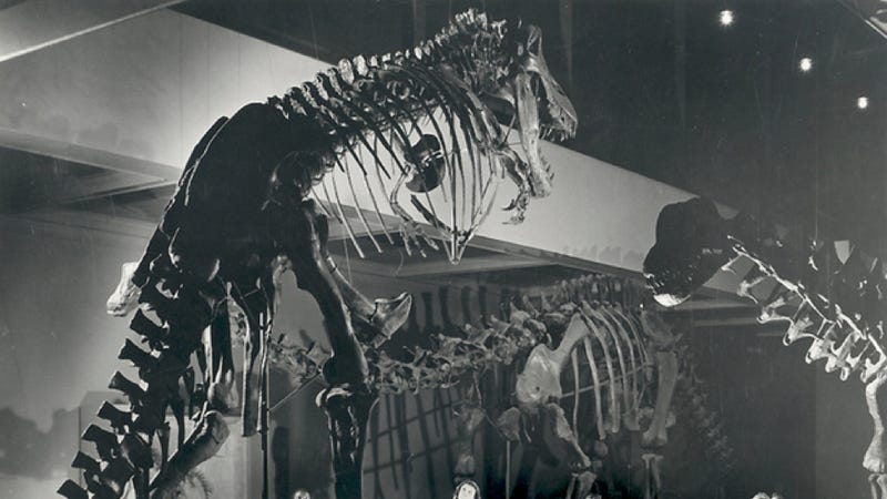 Whatever happened to the world's first T. rex skeleton?