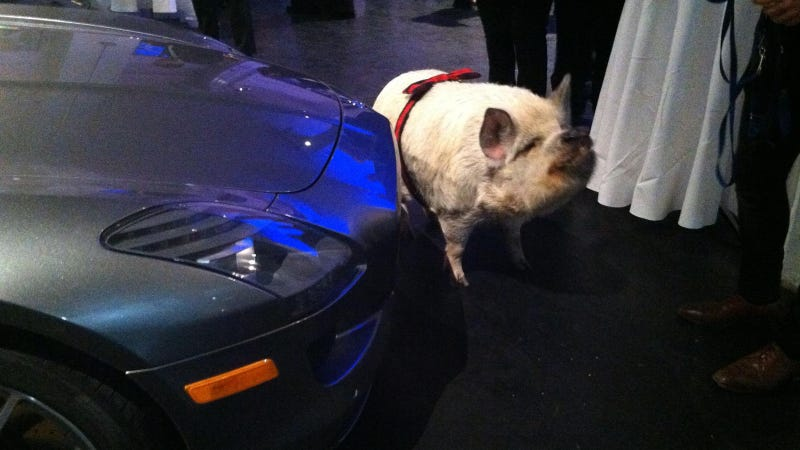 Here's A Pig And A Mercedes SLS AMG