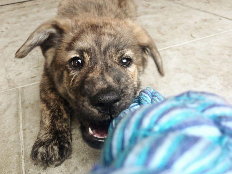 How Adopting A Dog Saved My Life